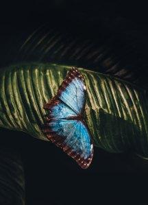 bluebutterfly-annie-spratt-199474-unsplash